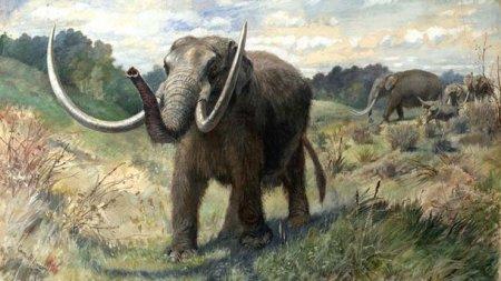 Открытие палеонтологического музея