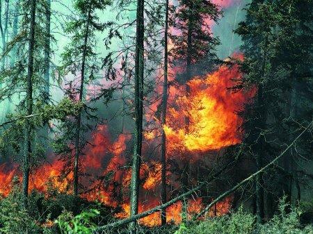 В Болгарии вероятность возникновения пожаров очень высока